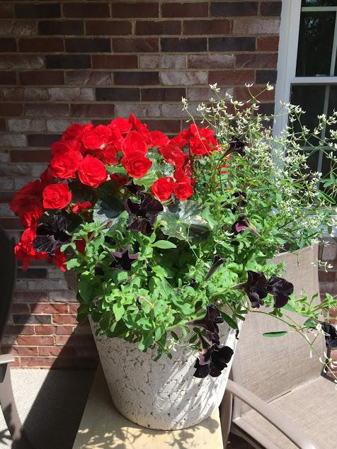 cathy's planter